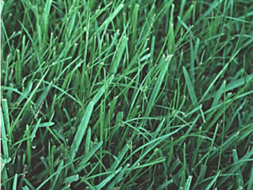Lawn And Ornamental Care And Pest Control In Central Florida